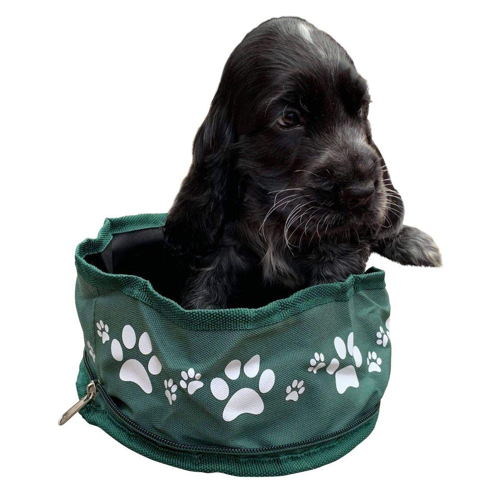 Folding Dog Bowl